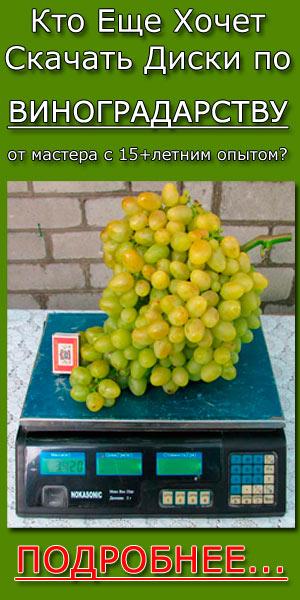 Скачать диски по виноградарству