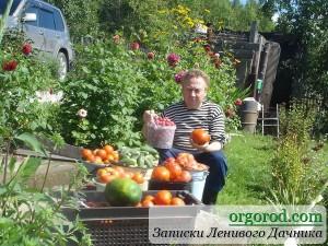 Урожайные грядки от Игоря Лядова