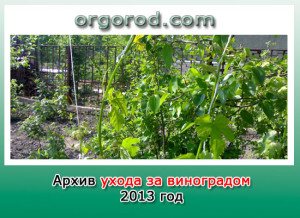 Архив ухода за виноградом за 2013г