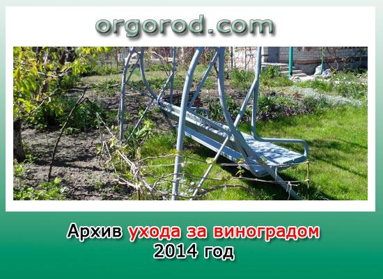 Архив ухода за виноградом за 2014г