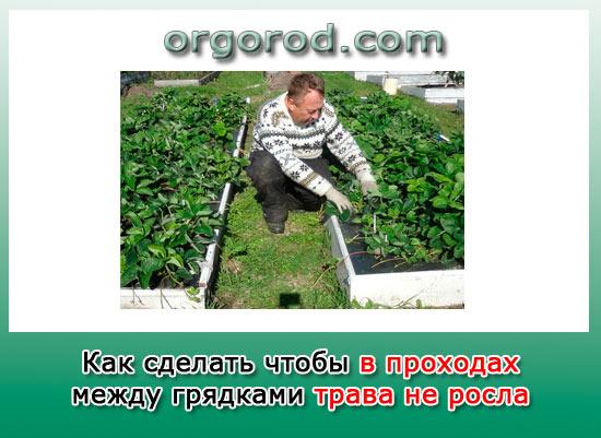 Как сделать чтобы в проходах между грядками трава не росла? Совет от игоря лядова