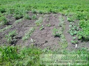 Овощные растения