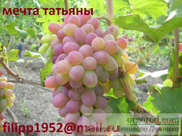 mechta_tatjany