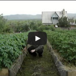 Видео с Игорем Лядовым