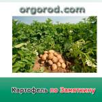 Картофель по Замяткину