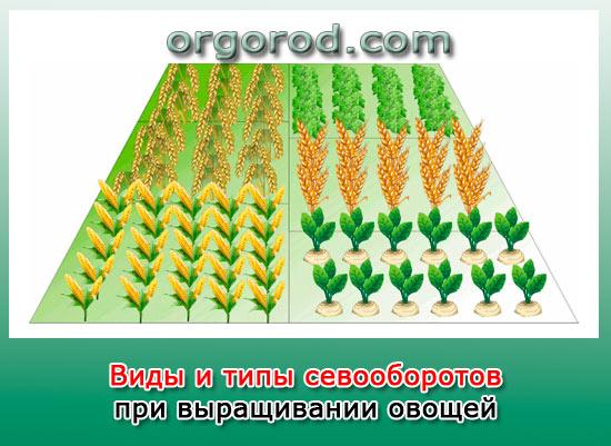 Виды и типы севооборотов при выращивании овощей
