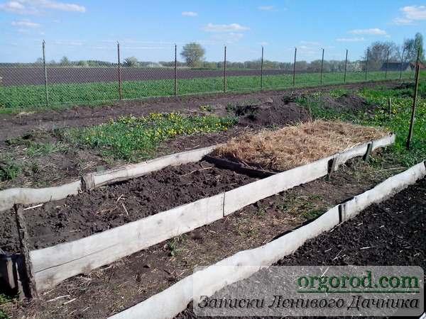 Картофель в сене