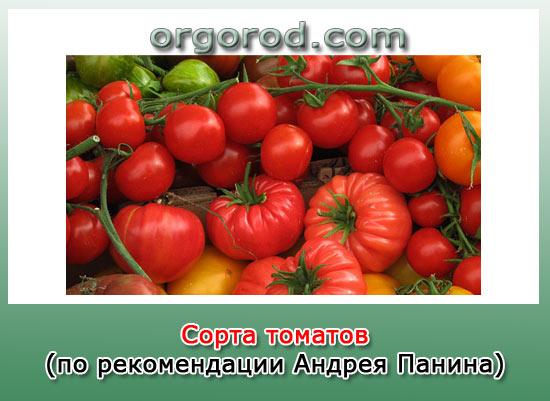 Сорта томатов (по рекомендации Андрея Панина)