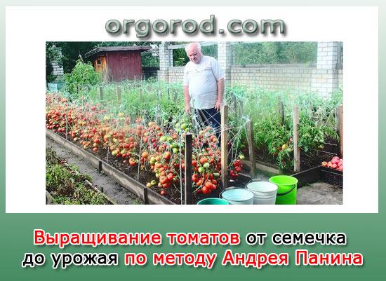 Выращивание томатов от семечка до урожая по методу Андрея Панина
