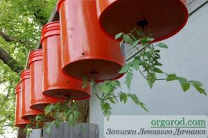 Выращивания томатов вниз головой