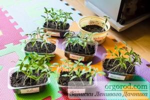 Все способы замачивания семян