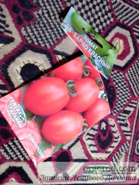 Семена томатов для эксперимента