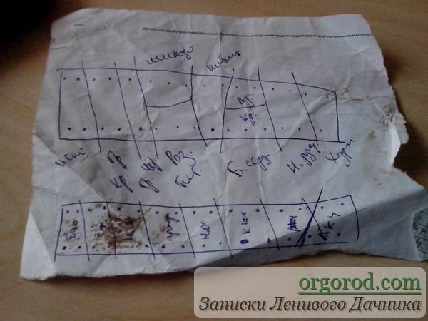 Черновая схема посадки томатов