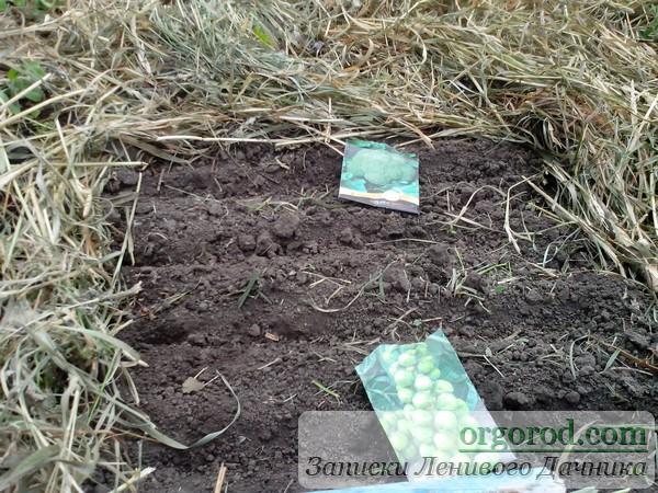 Посев семян на рассаду капусты на грядку