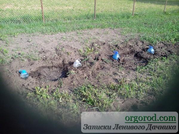 Бутли в земле для полива винограда
