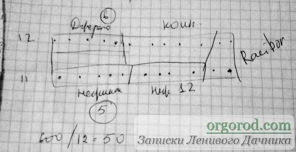 Схема посадки огурцов