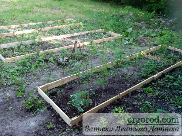 Короба под садовые кусты