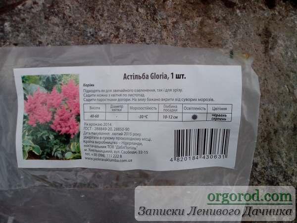 Семена цветов для цветника