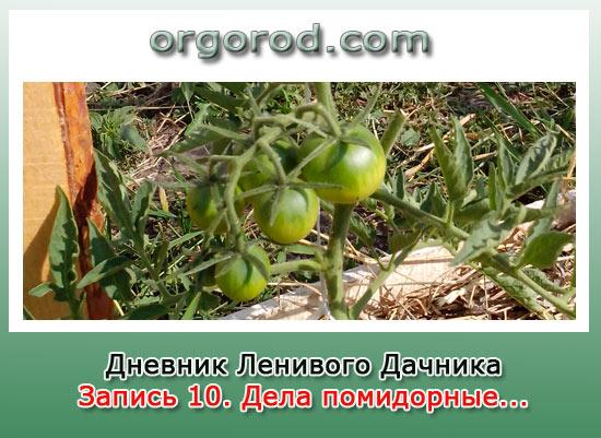 Заметка №10. Дела помидорные...