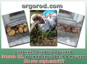 Заметка №16. Урожай картофеля в мешках – вы это серьезно???