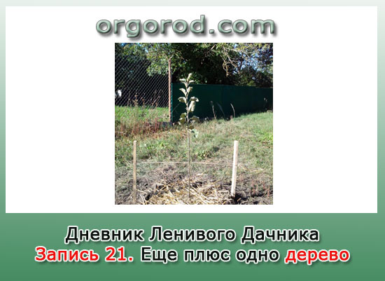 Заметка №21. Еще плюс одно дерево.