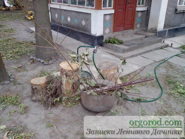 Отменные саженцы плодовых деревьев