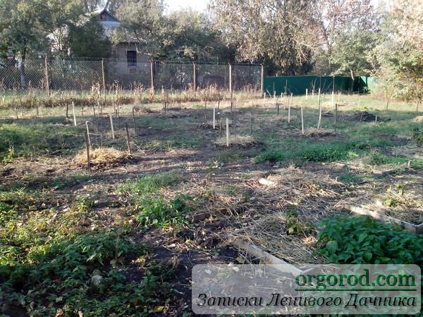 Будущий сад плодовых деревьев