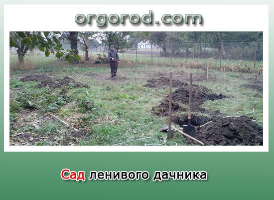 Сад ленивого дачника