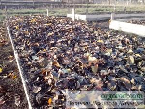 Укрытие высоких грядок листьями на зиму