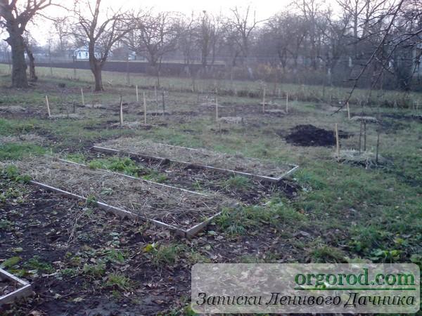 Плодовые деревья в саду