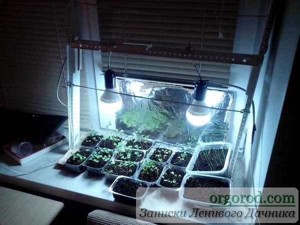 Светодиодные светильники для рассады капусты