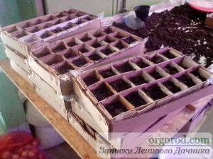 Картонная коробка для выращивания рассады