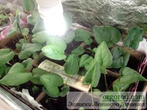 Ящик для рассады с растениями