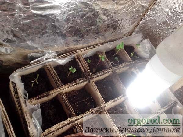 Выращивание редиски на балконе