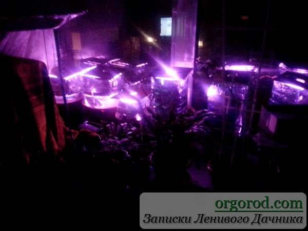 Выращивание рассады по светодиодной подсветкой