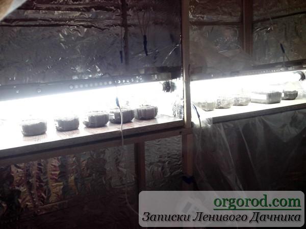 Сеянцы в стеллаже