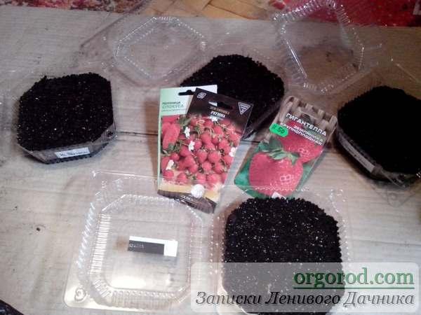 Посев семян клубники на рассаду