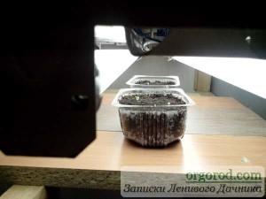 Емкости с сеянцами перца и баклажан