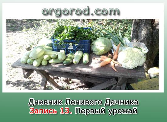 Запись 13. Первый урожай